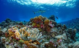 'Momentous' mapping project completed, helping to save world's reefs
