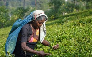 Pesticide linked to chronic kidney disease